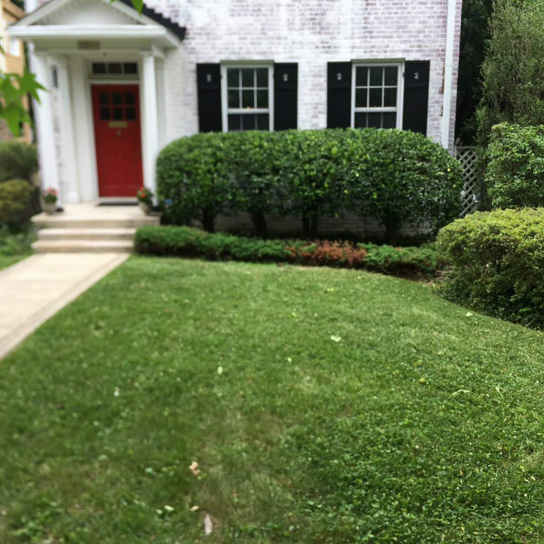 landscaping (3)