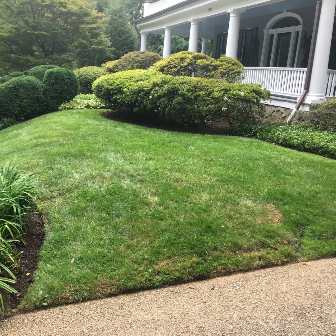 landscaping (4)